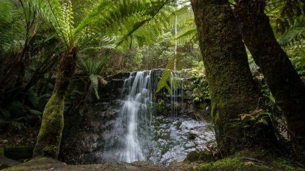Waterfall, treeferns, walks, tour, hobart tasmania